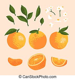 Vector summer set with oranges and flowers isolated on background