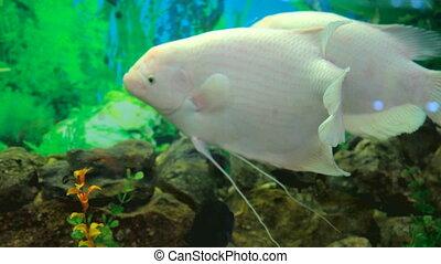 Fish underwate