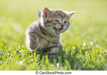 Young funny cat meowing outdoor - Funny cat meowing in green...