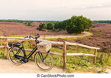 Electric bicycle with basket in Dutch national park The...