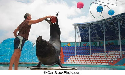 sea lion and trainer - sea lion and the instructor played...