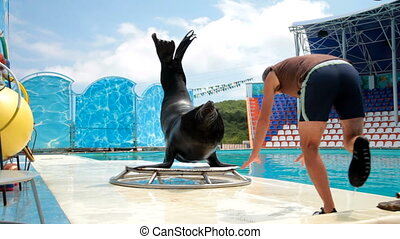 sea lion and trainer - sea lion and the instructor