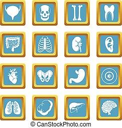 Human organs icons azure