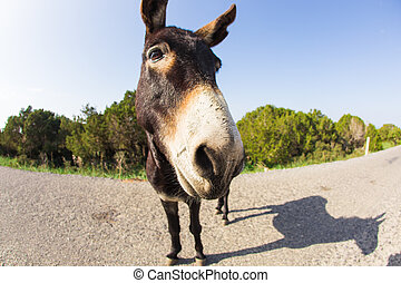 Portrait of funny wild donkey - funny donkey looking at the...