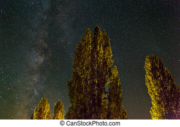 Trees Under the Milky Way on a Starry Night