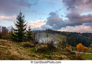 forest on hillside in stormy weather - forest by the road on...