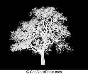 Lonely tree isolated
