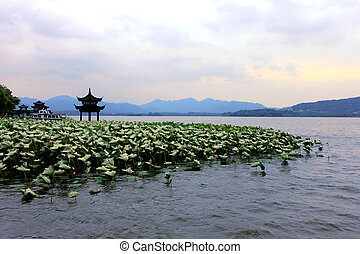 Beihai park scenery with pavilion and lotus in summer in Beijing,China