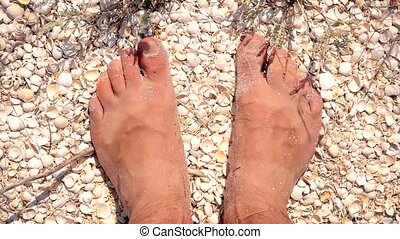 Feet of young man standing on beach full of seashells - Bare...