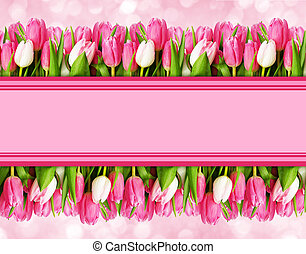 Pink tulip flowers borders and space for text on pink...