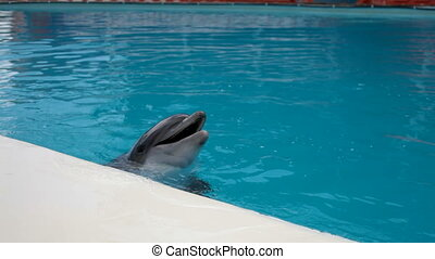 dolphins head closeup - Dolphins head into the blue water...