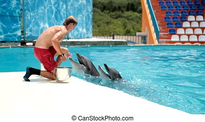 Feeding Dolphins - Feeding time for some dolphins
