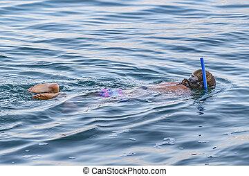 Woman Snorkelling, Galapagos, Ecuador - Woman snorkelling at...