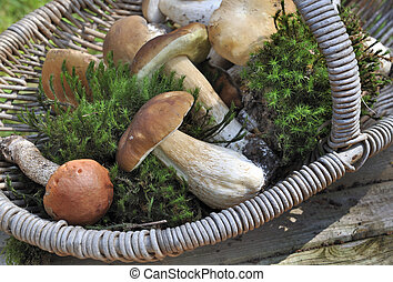 fresh ceps and boletus - fresh cep and boletus with moss in...