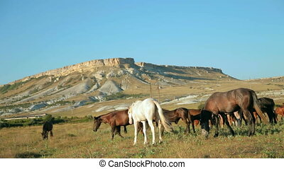 herd of horses in the mountains