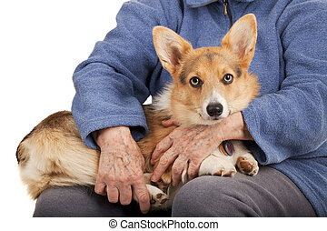 old hands and young puppy - caring hands of senior woman and...