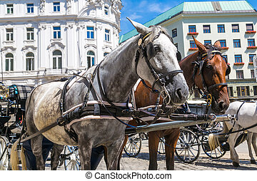 Horse carriage in Vienna, Austria in a beautiful summer day