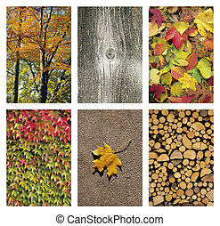 Six Autum backgrounds - Collage of Autumn backgrounds and...