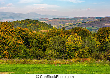 lovely Carpathian countryside in mountains - lovely...