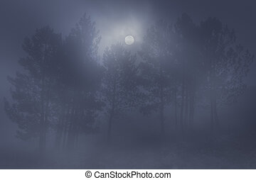 Foggy woods at night