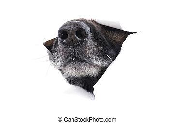 muzzle dog - object on white - muzzle dog close up