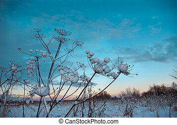 Winter scene frozenned flower - Winter landscapeWinter scene...