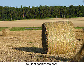 Hay Straw Bales on the Field, Blue Sky and Forest Background...