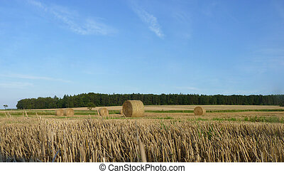 Hay Straw Bales on the Stubble Field, Blue Sky and Forest...