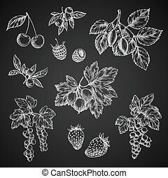 Vectro chalk sketch icons of berries fruits - Berries chalk...