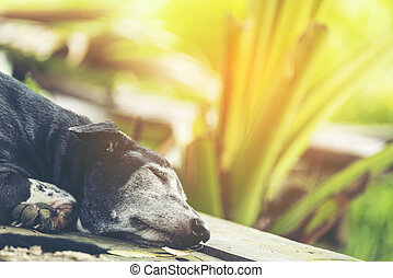 Sleeping dog in the green atmosphere of nature