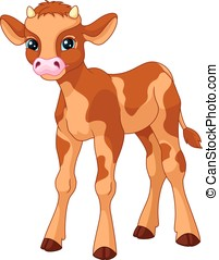 Calf - Young calf on white background