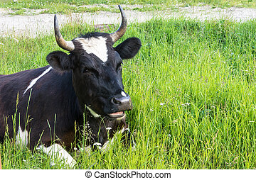 Black and white cow resting on green grass.
