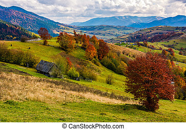 stunning rural landscape in mountains. woodshed and trees...