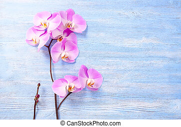 fresh rose orchid flowers and a little bunch with bud on the blue vintage wooden background