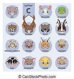 c, animal, alfabeto, -, letra, retrato