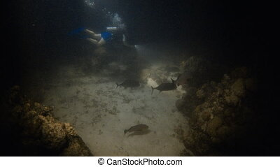 Green seabed with scuba diver - A wide shot of the seabed...