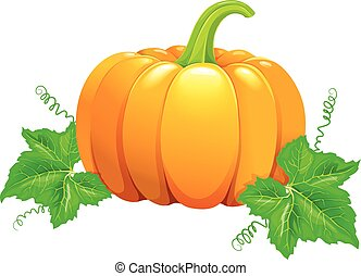 Beautiful ripe orange pumpkin