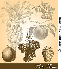 Vector Fruits - Antique vector fruits. Colors are easily...