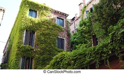 Overgrown old buildings in Venice, Italy - Overgrown old...
