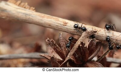 Ants runing around - Ants crawling on plant parts