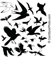 Bird Icons - Vector Bird icons. Isolated on white...