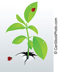 young green plant and ladybird