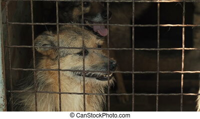Homeless Dogs Behind bars - Dogs Behind Metal wire fence or...