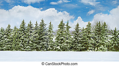 Beautiful winter landscape.Field covered with snow and...