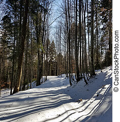Snow covered road in the woods - Winter landscape with a...