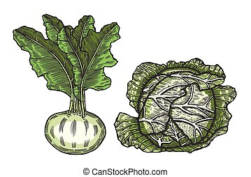 cabbage and beets - Vegetables drawn in ink on a beige...