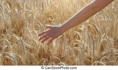 girl touching wheat in wheat field and moving to forward