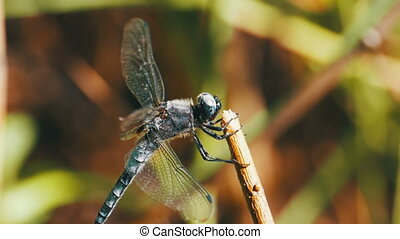 Dragonfly on a Branch on Green Plants Background. Slow...
