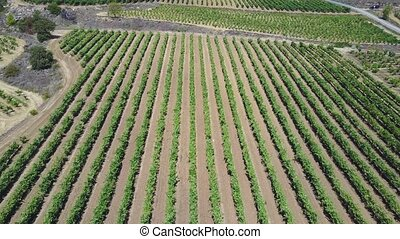 Vineyards in Elciego - Elciego aerial view,Alava,Rioja,Spain