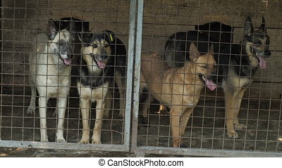 Homeless Dogs in a Cage - Dogs Behind Metal wire fence or...